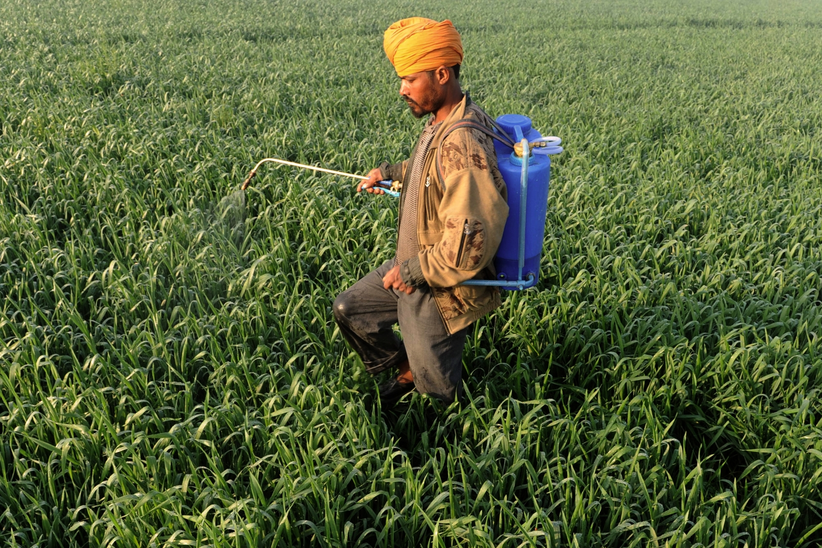 Experts believe the use of pesticides in India's Punjab is behind increasing cancer rates. (AFP/Getty Narinder Nanu)