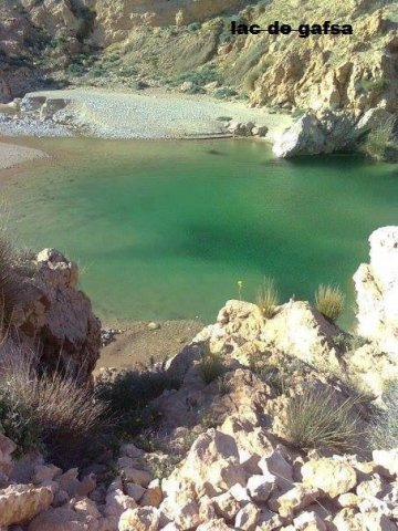 The waters of Lake Gafsa are turning green and is now full of algae.