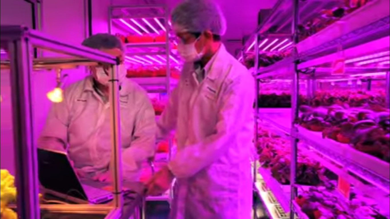 Panasonic's indoor vegetable farm in Singapore