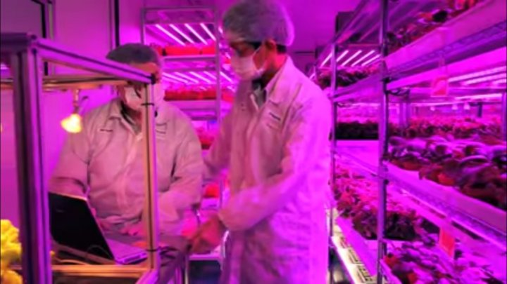 Panasonic's indoor vegetable farm in Singapore
