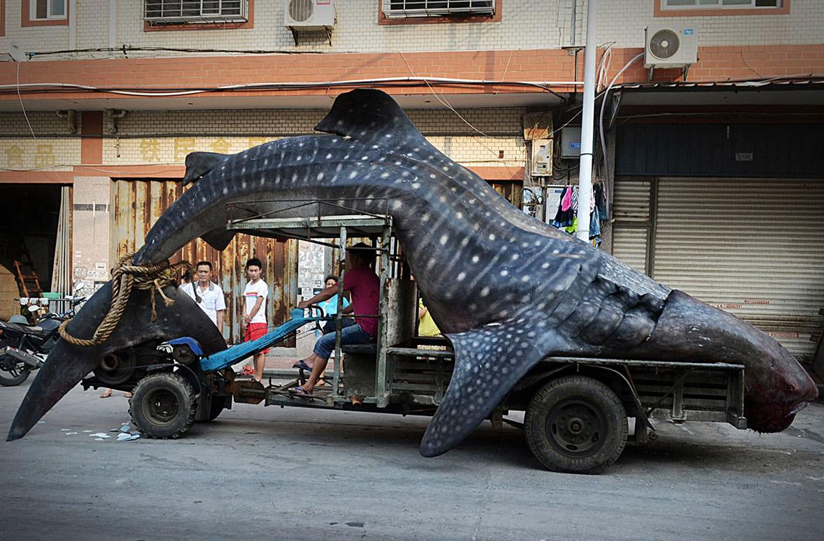 whale shark car