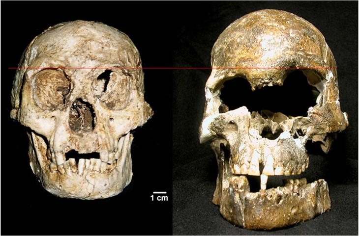 skull from flores