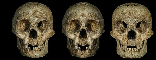 flores hobbit skull