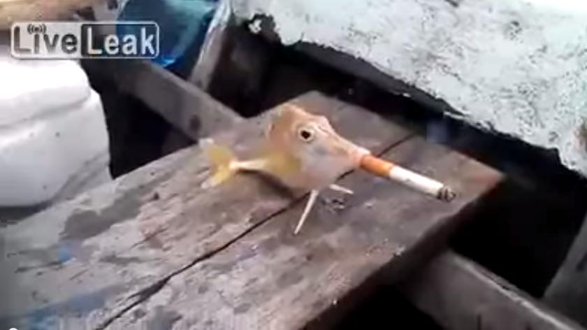 fish forced smoke cigarette