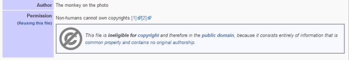 wikimedia copyright monkey selfie