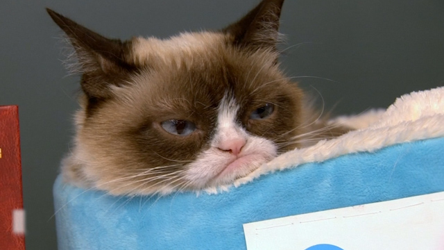 Grumpy Cat Frowns upon New York City