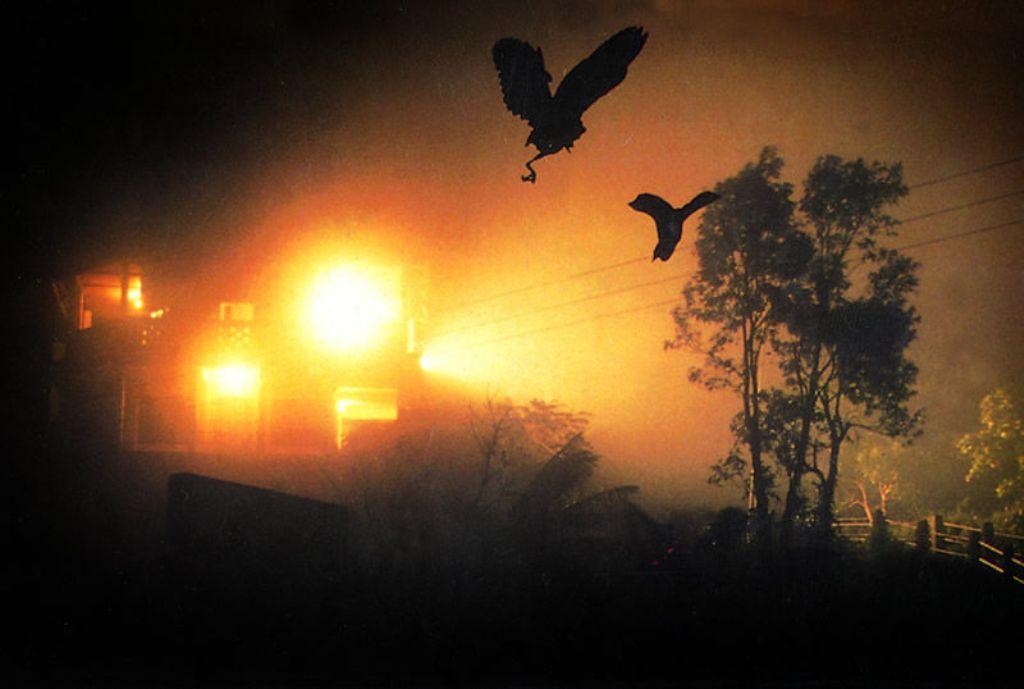 Jatinga suicidal birds