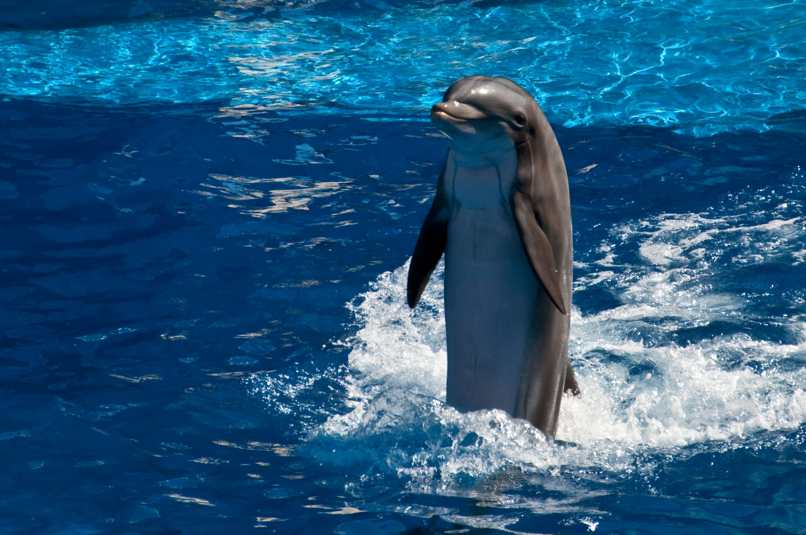 Dolphins Squeal with Delight Because They Are Happy, Study Finds