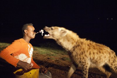 feeding hyena mouth