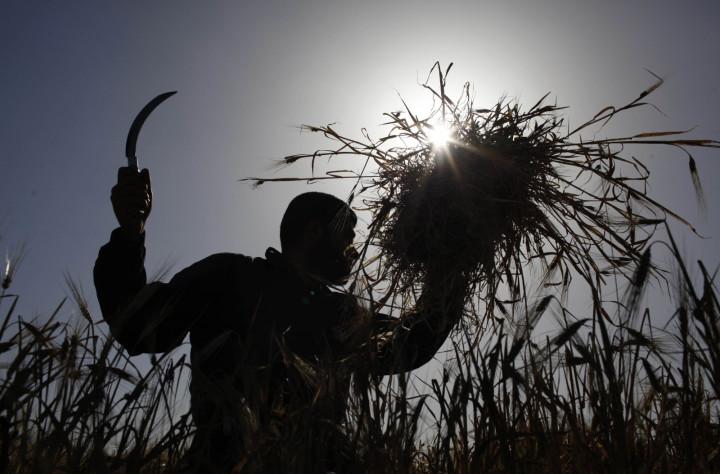 Palestinian farmer