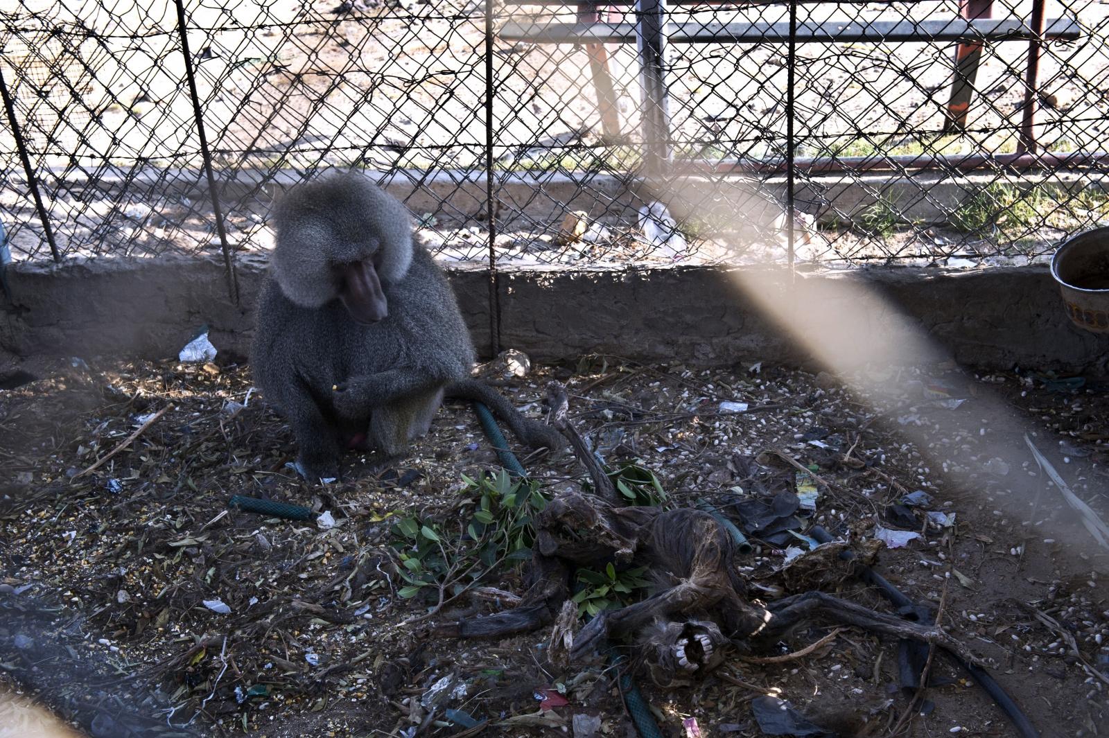Gaza zoo