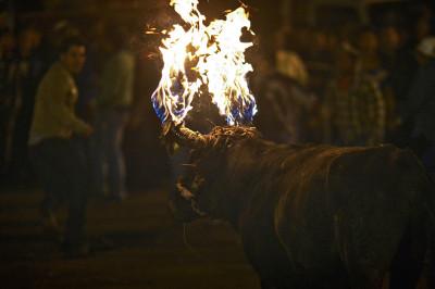 bull horns fire