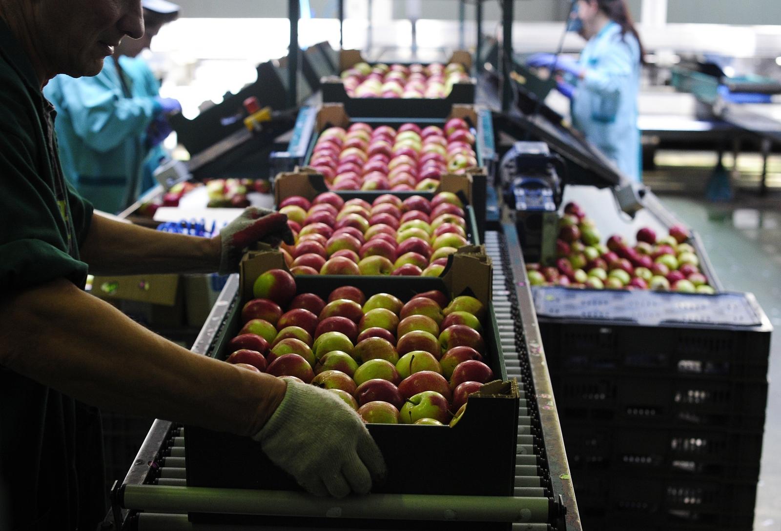 Poland's apples