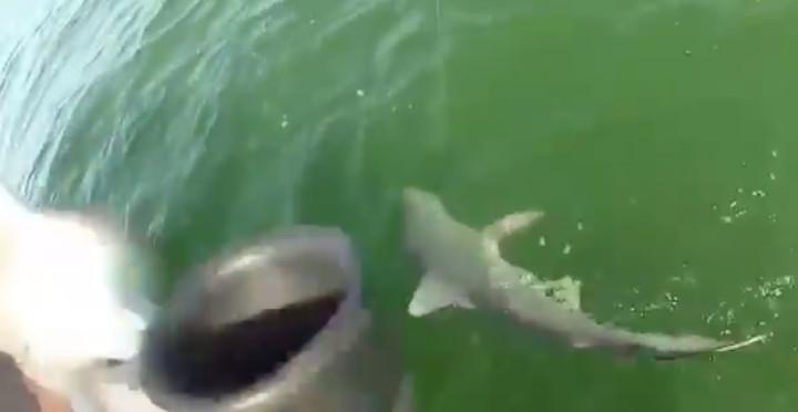 shark eaten by fish