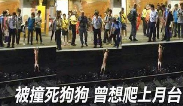 Dog tries to mount platform at Fanling Station shortly before dying and starting a social media firestorm