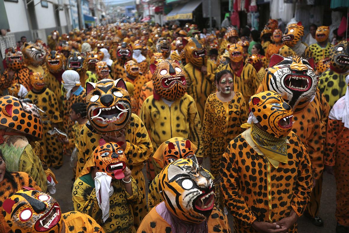 leopard festival