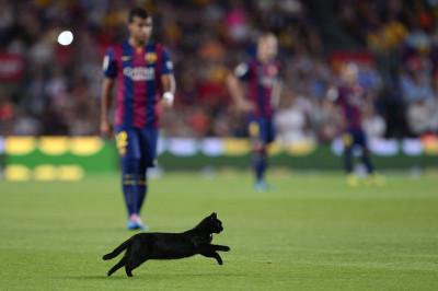 barcelona cat