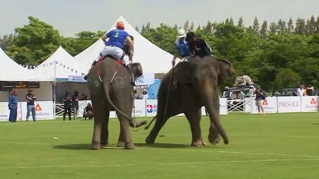 Elephant Polo Kicks Off in Thailand