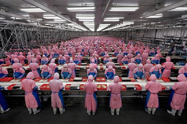 Human farms