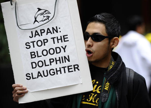 Dolphin hunting Japan protest