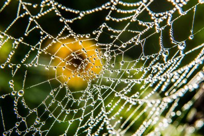 spider web dew
