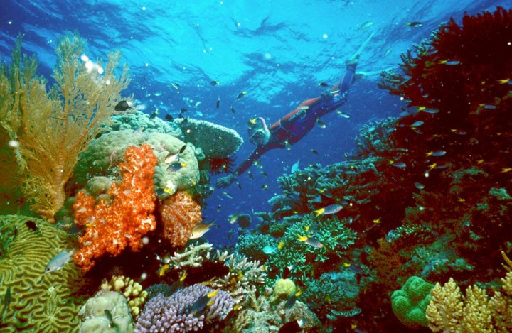 Scientists Report Ocean Acidification Causes 1 Trillion Damage