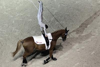 equestrian vaulting horse