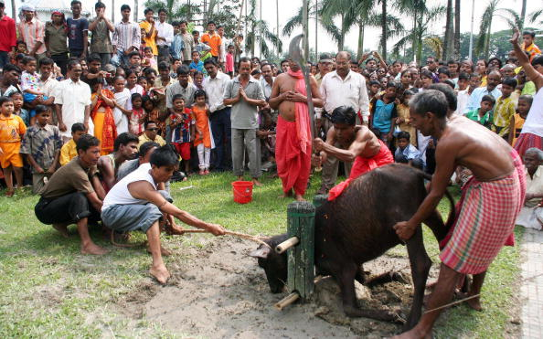 India animal sacrifice,