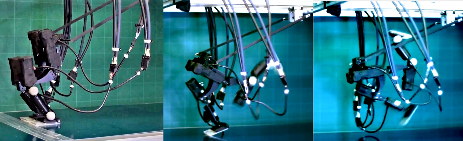 The Achires biped robot in action
