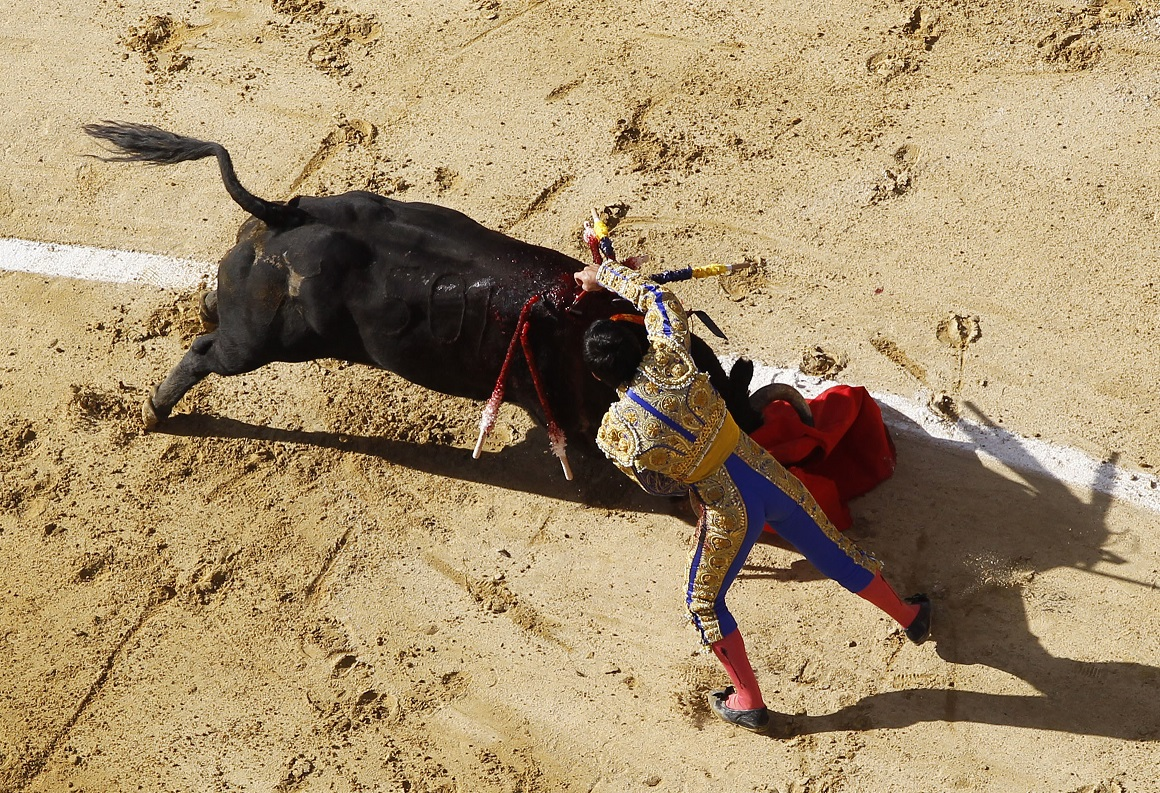 Bull fighting in Bogota is back after ban was lifted by constitutional court in Colombia
