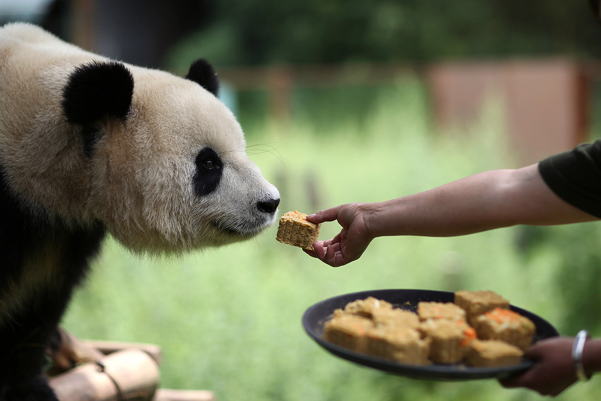 panda moon cake