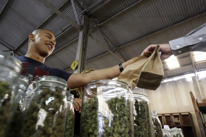 Free marijuana for those earning less than $32,000 (£19,00) in California town of Berkeley
