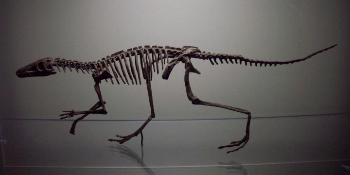 Lagosuchus talampayensis