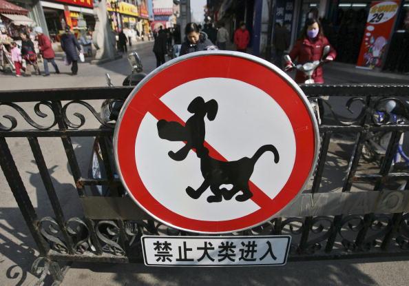 China Rabies