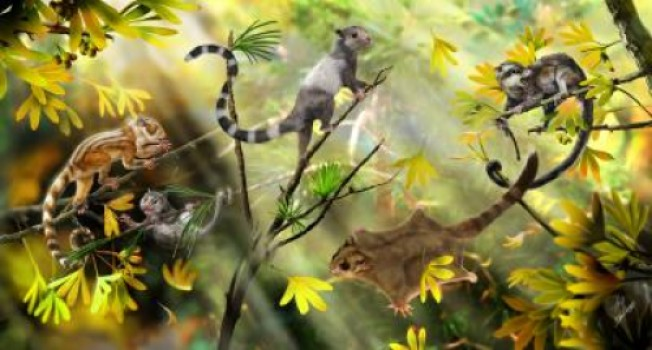 Three Squirrel Like Species Place Mammal Evolution At 208