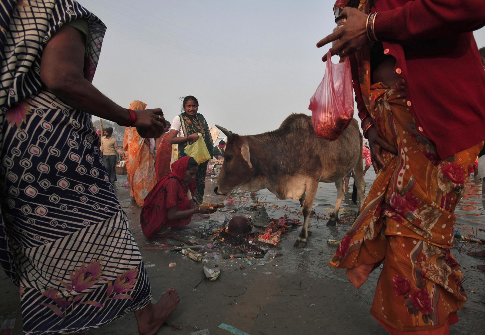 INDIA.COW