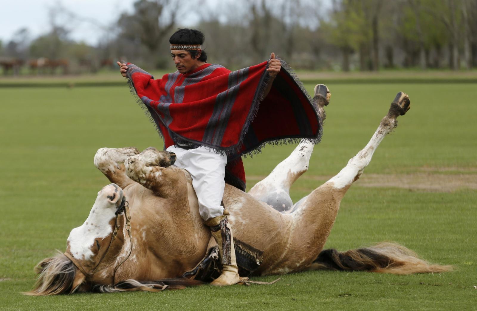 Horse Whisperer Martin Tata