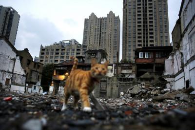 Cat Shanghai Xintiadi Demolition