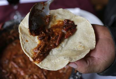 Centipede Taco Mexico 1