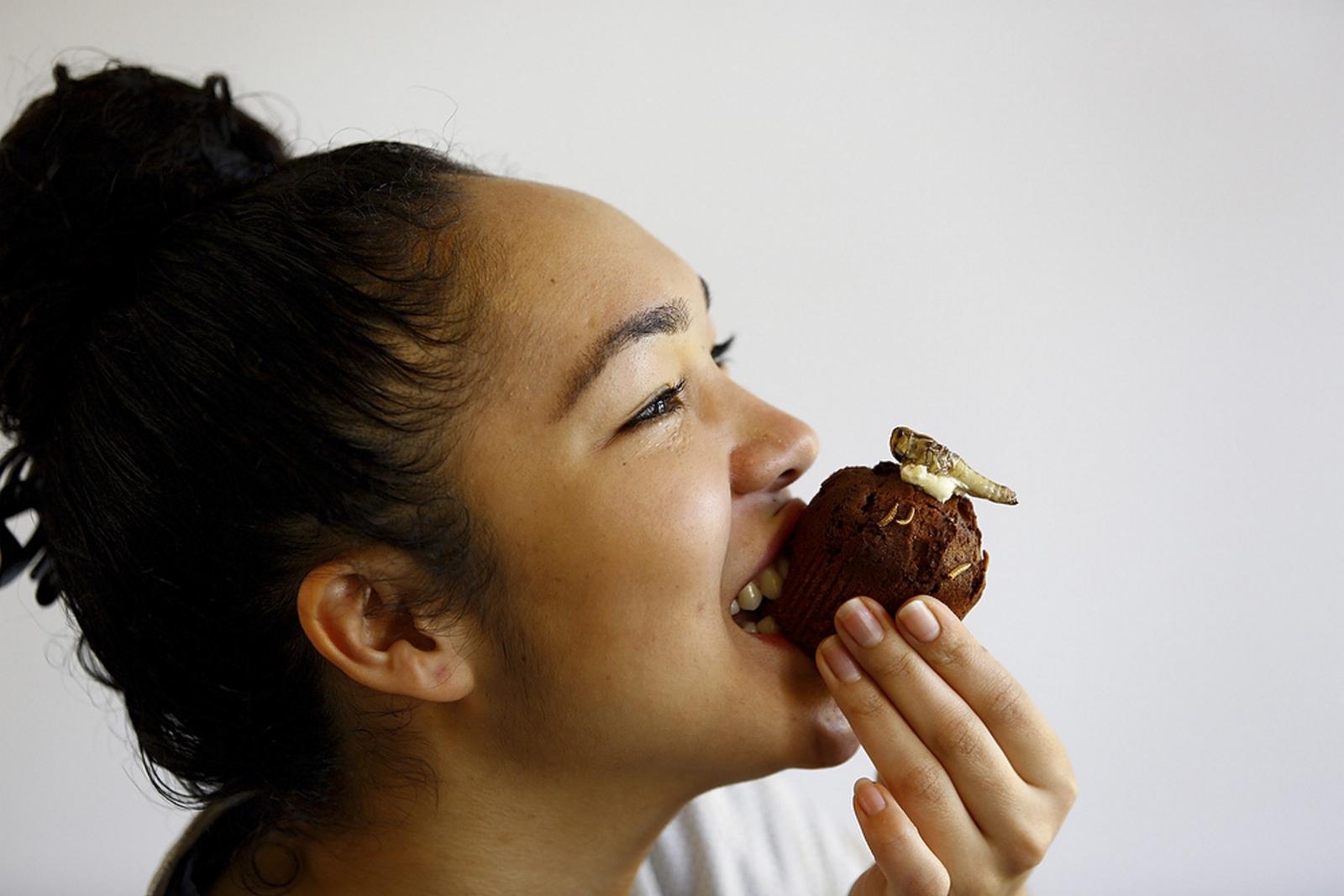 Cupcake Mealworm