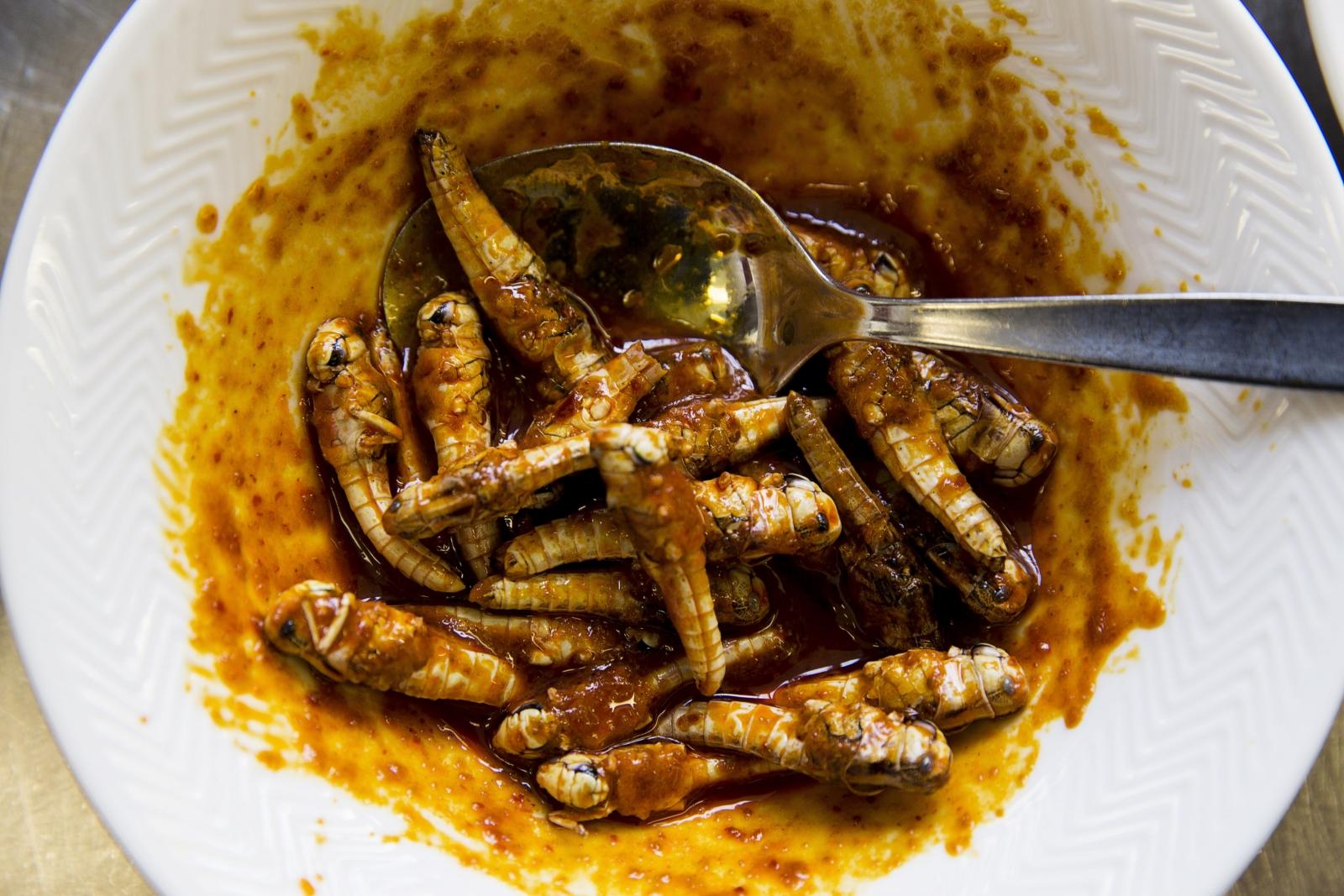 Choi Mealworm Locust Dish 2