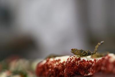 Scorpion Cupcake Explorers Club Dinner