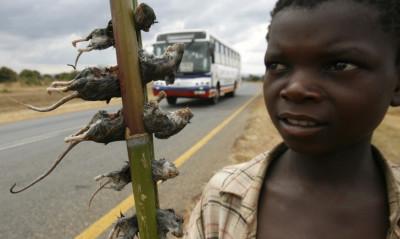 Boiled Rats Malawi