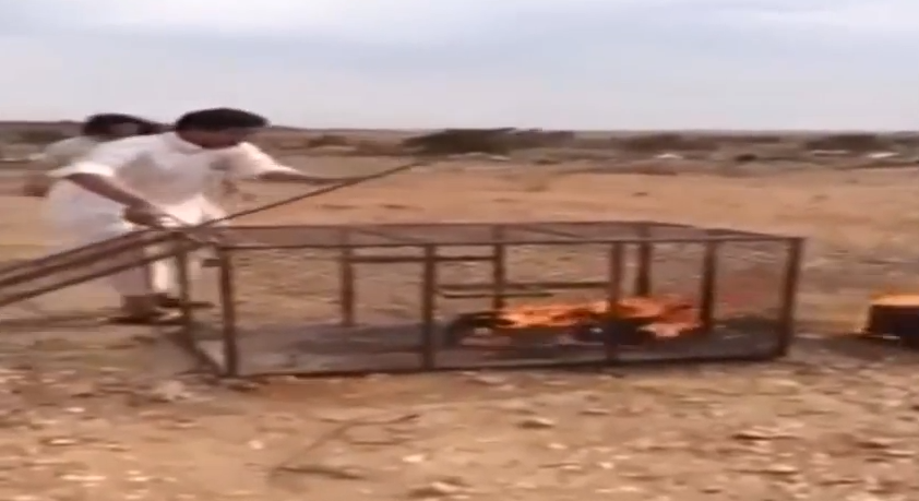 Fox burned to death