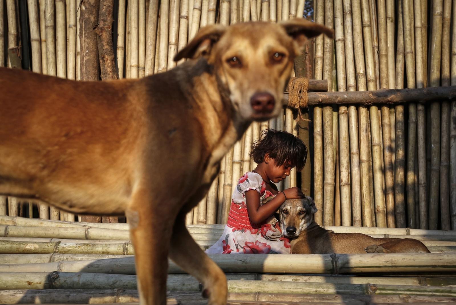 INDIA.DOG