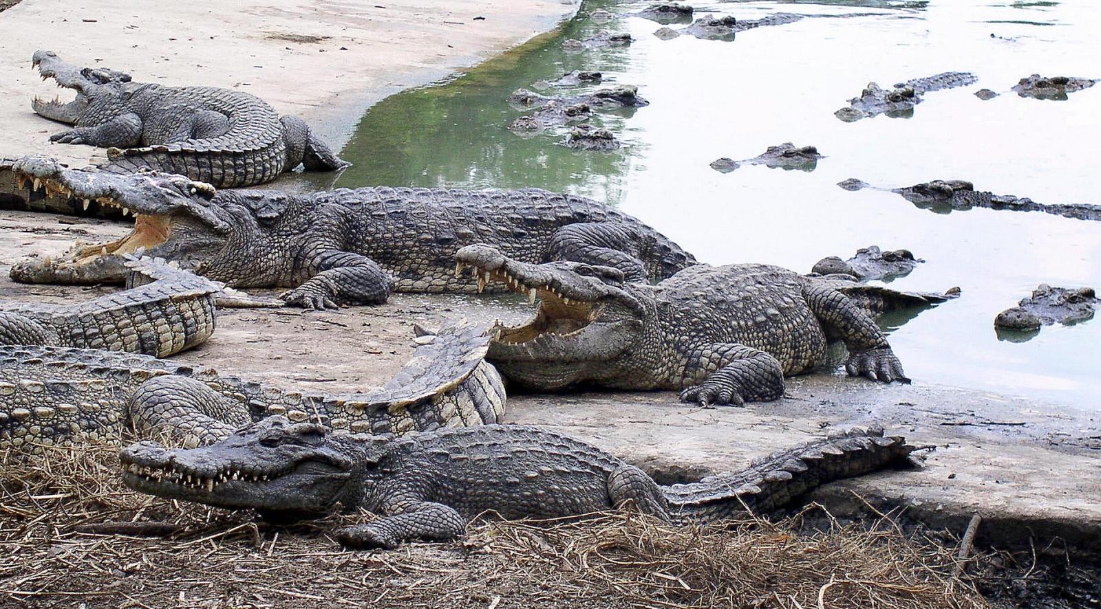 Wanpen Inyai was eaten alive by crocodiles at Bangkok Zoo in Thailand in suicide