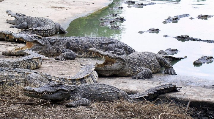 Wanpen Inyai was eaten alive by crocodiles at Bangkok Zoo in Thailand in suicide