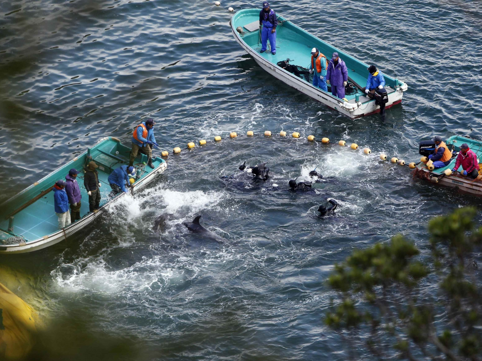 Dolphin hunting Japan