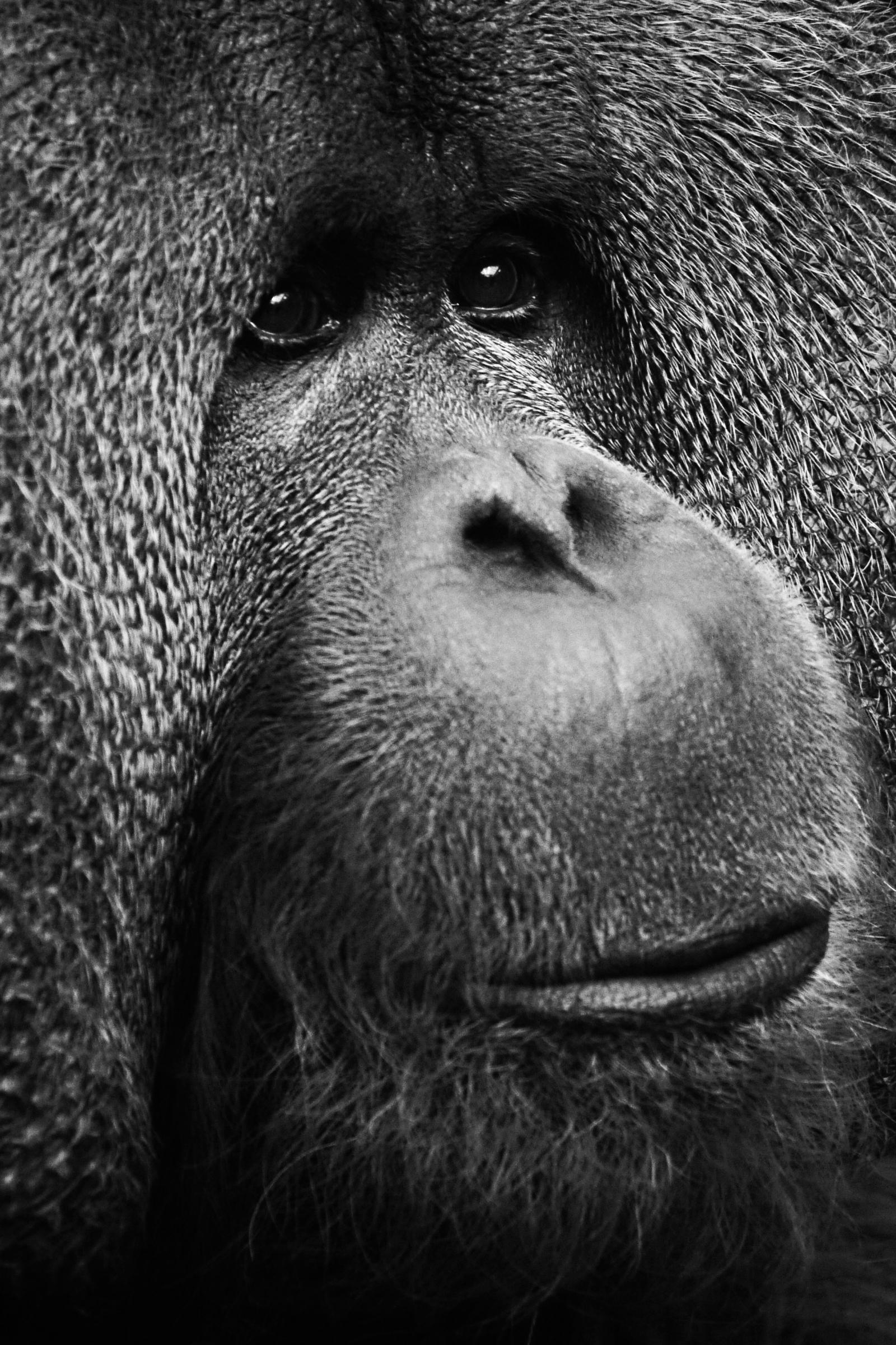 ZSL Animal Photography Prize 2014