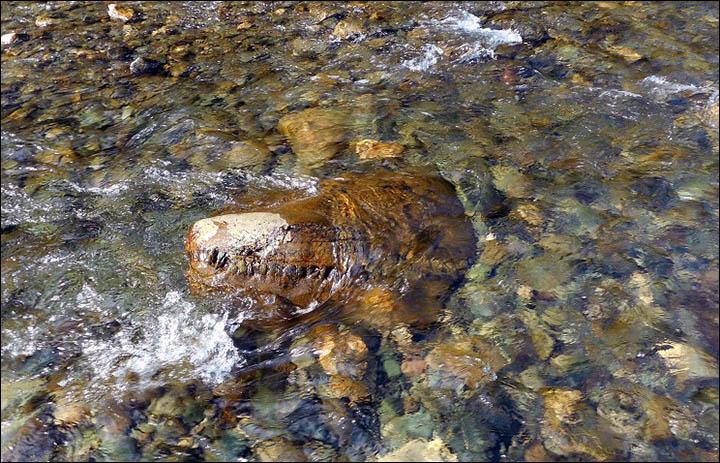 Siberian crocodile monster